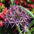 La flore du parc